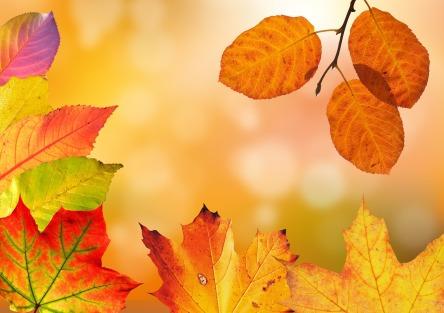 autumn-1649362_1280.jpg