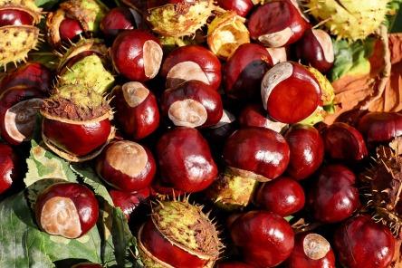 chestnut-1710430_960_720.jpg