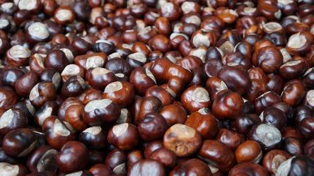 chestnut-1761698_960_720