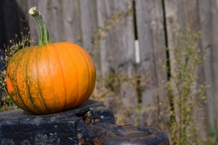 pumpkin-1710276_960_720