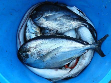 fish-422543_960_720.jpg