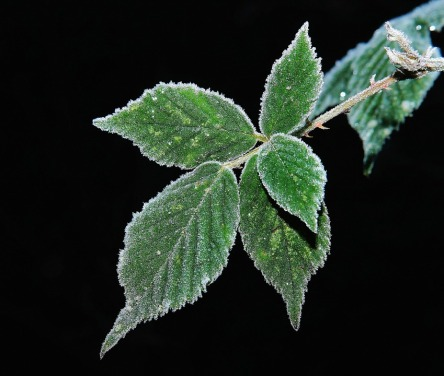 leaves-580369_960_720.jpg