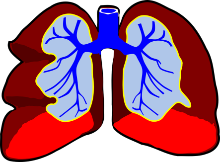 lungs-296392_960_720.png