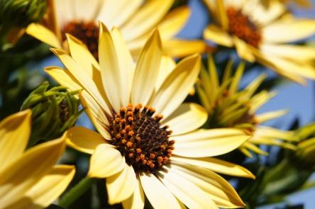 flower-108685_960_720.jpg
