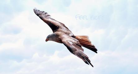 freedom-589576_960_720.jpg