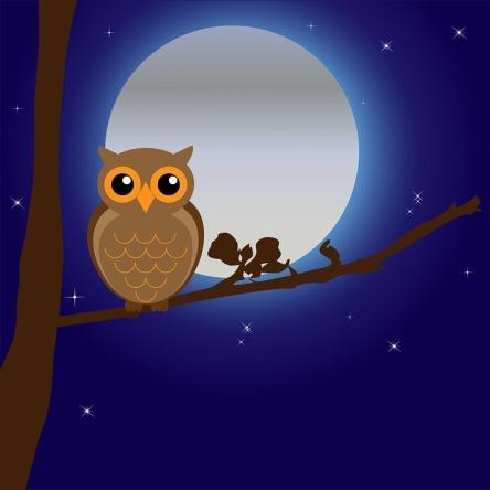 owl-163574_960_720.jpg