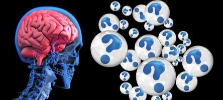 brain-2546101_960_720.jpg