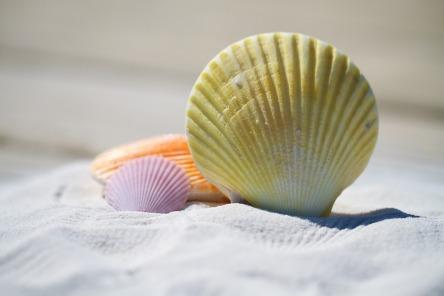 shells-792912_960_720.jpg