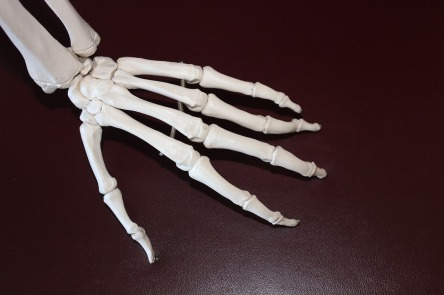 skeleton-778069_1280.jpg