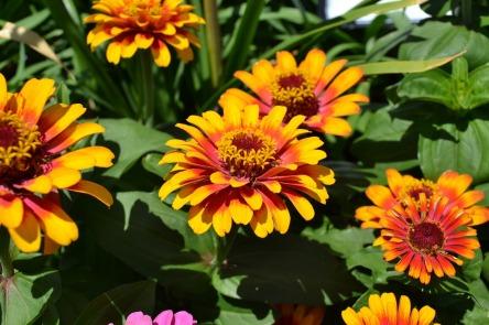 flowers-22893_1280.jpg
