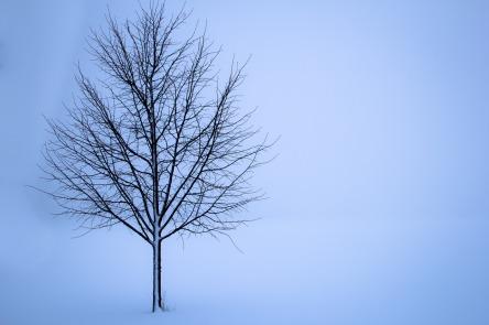 tree-1056598_1280.jpg