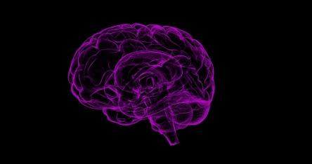 brain-1787622_960_720.jpg