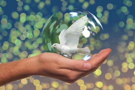 peace-dove-2489589_1280.jpg