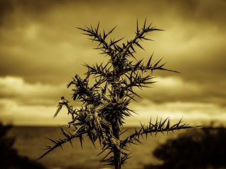 thorns-2013825_1280.jpg
