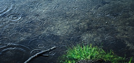 rain-2362871_960_720.jpg