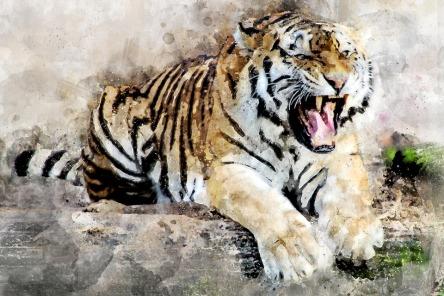 tiger-2864785_960_720.jpg