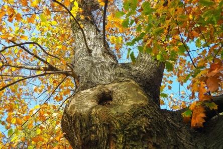 tree-2909245_960_720.jpg