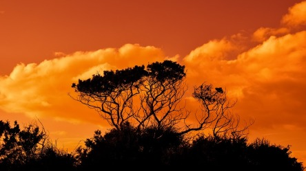 trees-2920264_960_720.jpg