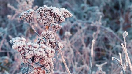 winter-2977065_1280.jpg