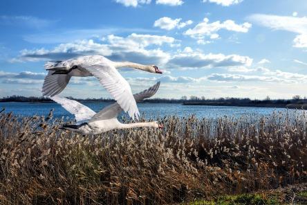 birds-3186341_960_720.jpg