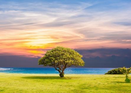 tree-2435269_960_720.jpg