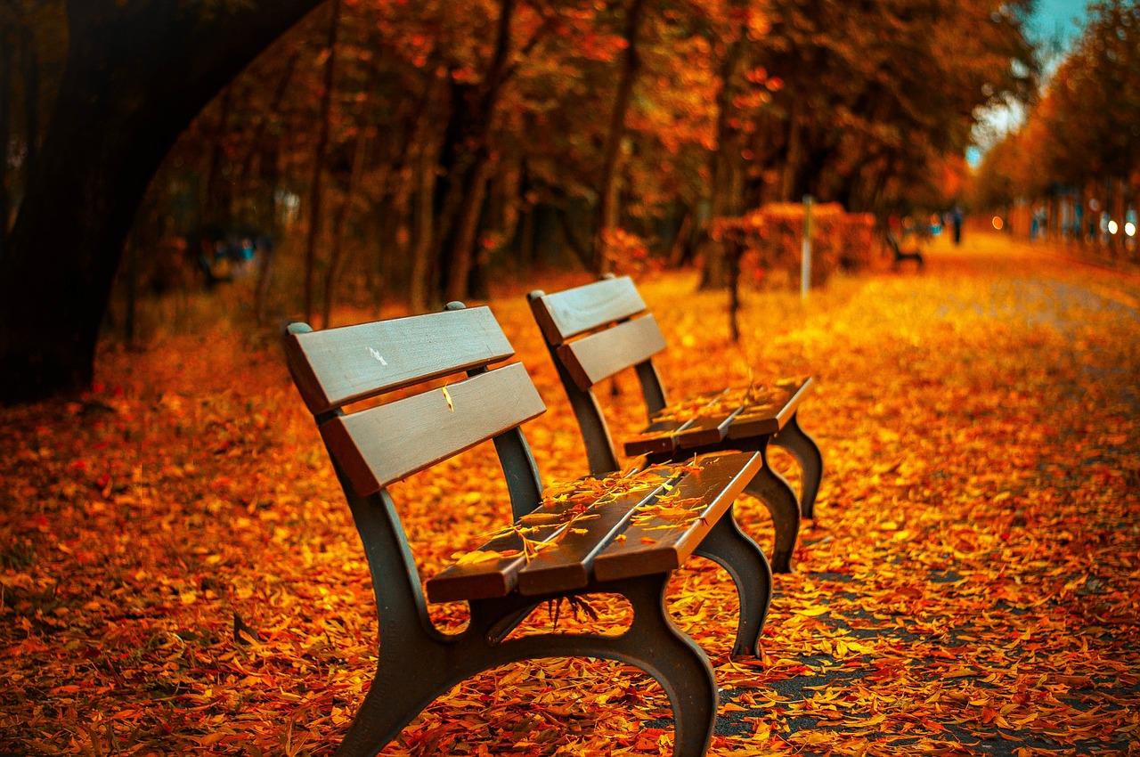 bench-560435_1280.jpg