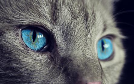 cat-1285634_960_720.png
