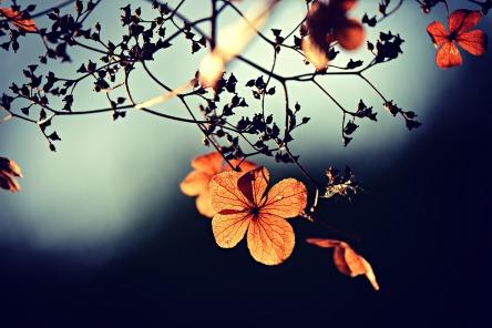 flower-3876195_1280.jpg