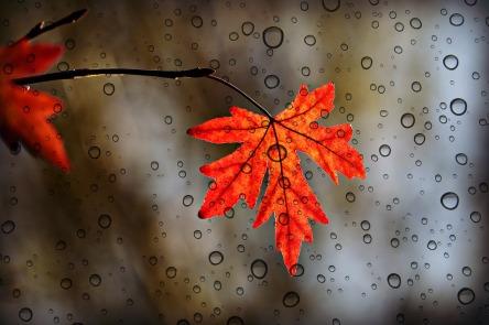 leaf-3865014_1280