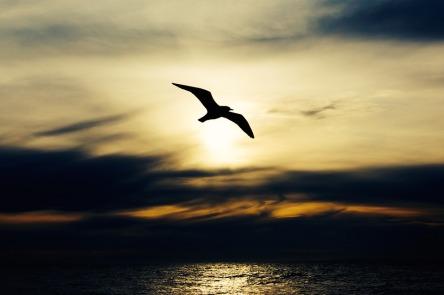 seabird-768584_960_720.jpg