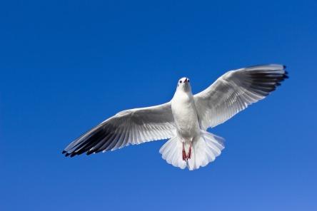 seagull-1149576_960_720.jpg