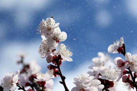 flowers-4071571_960_720