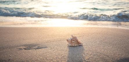 beach-4301479_960_720.jpg