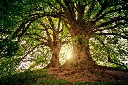 tree-3822149_960_720.jpg