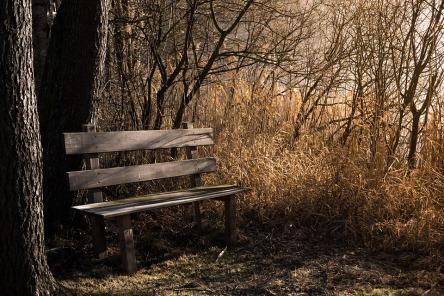 bench-1190768_960_720.jpg