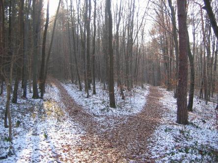 forest-path-238887_1280.jpg