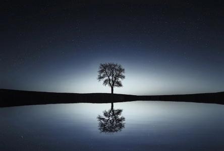 tree-736881_960_720vvvv