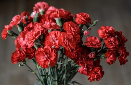 carnation-1488929_960_720
