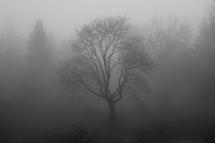 tree-1031814_960_720